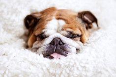 Snuggle time...
