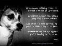 A Dog's Prayer for grieving humans - Happiness awaits: I Believe In Dog Heaven Prayers For Grieving, I Love Dogs, Puppy Love, A Dogs Prayer, Pet Loss Grief, Pet Remembrance, Rainbow Bridge, Pet Memorials, Animal Quotes