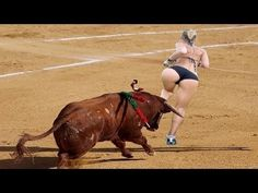 Funny videos 2016   Most awesome bullfighting festival