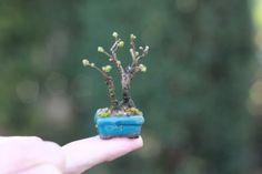 Blog de la super mini bonsaï