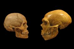 What ancient DNA tells us about humans and Neanderthals - The Verge