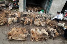 American Food Made in China | Chinese Rescuers Seek Homes for 1100 Confiscated Dogs