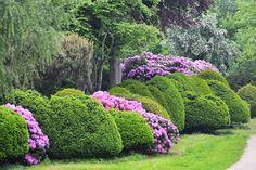http://www.gartentechnik.de/fotos/2014/03/Rhododendron_Begleiter_BGL.jpg