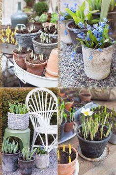 Trädgårdsflow: Protecting the pots
