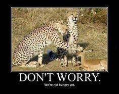 Comforting Cheetahs