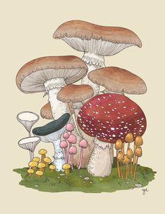 Mushroom Collection 3. Fine art print. $15.00