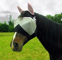 Protect Your Horse from the Sun