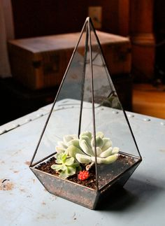 love this geometric terranium with succulents inside