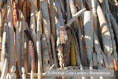 France to Destroy Ivory Stockpile, Increase Penalties for Ivory Traffickers http://annamiticus.com/2013/12/10/france-destroy-ivory-stockpile-increase-penalties-ivory-traffickers/