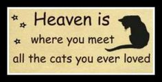 Heaven is where you will meet all the cats you ever loved. I have a lot of them that has crossed the rainbow bridge my shadow bug is my angel baby I will always love him even though hes gone but never forgotten until we meet again moma loves you my angel Crazy Cat Lady, Crazy Cats, I Love Cats, Cute Cats, Adorable Animals, Cat Quotes, Cat Sayings, Lovers Quotes, Animal Quotes