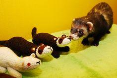 Stuffed ferret