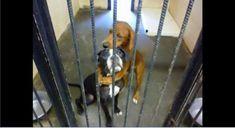 殺処分が目前に迫った2匹の犬が、檻(おり)に入れられ、おびえ切った様子で固く抱き合っているように見える写真が保護団体のフェイスブックに掲載され、大きな反響を呼ぶ出来事があった。  写真に写っている茶色と黒白の犬は「カラ」と「ケイラ」。処分施設の檻の中で、カラが茶色い両前足をケイラの首に回して固くし...