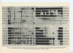 Stellar Spectra, 1959
