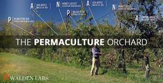 How You Make a Living From a 4 acre Permaculture Orchard - Walden Labs Permaculture Farming, Permaculture Design, Permaculture Principles, Agriculture, Organic Gardening, Gardening Tips, Vegetable Gardening, Farm Gardens, Veggie Gardens