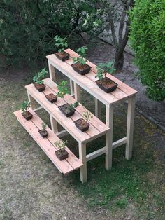 Bonsai trees and associated plants. Focussing on styling bonsai, showing member's trees, bonsai care and general help. Wooden Plant Stands, Diy Plant Stand, Bonsai Plants, Bonsai Garden, Pot Jardin, Vegetable Garden Design, Flower Stands, Bedroom Plants, Plant Shelves