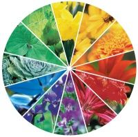 Of all the Color Theories, the warm& concept is very practical and manageable for quilters. It is easy to understand. Quilting For Beginners, Quilting Tips, Quilting Tutorials, Warm And Cool Colors, All The Colors, Colorful Garden, Colorful Flowers, Kensington Gardens, Design Seeds