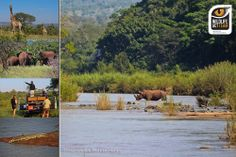 Private Games, Game Reserve, Volunteers, The Fresh, Conservation, South Africa, February, Photographs, African