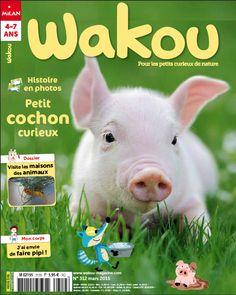 Wakou 312 mars 2015. © Photo : V. Burdyak/iStock. #cochon