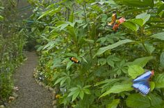 Butterfly Farm at the Gamboa Rainforest Resort