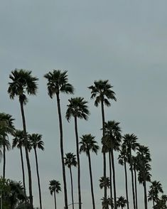 Bel Air, Palm Trees, Miami, Aesthetics, Florida, California, Happy, Plants, Summer