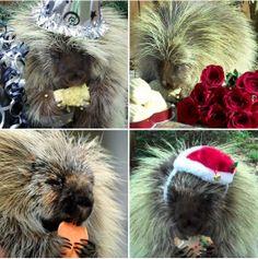 I'm a porcupine for all seasons.