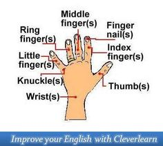 English for kids - Fingers #kids