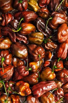 Chili Pepper Types - A List of Chili Peppers and their Heat Levels - Chili Pepper Madness Chocolate Habanero Recipe, Types Of Chili Peppers, Habanero Recipes, Jamaican Jerk Sauce, Tabasco Pepper, Pepper Seeds, Stuffed Hot Peppers