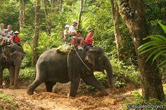 Elephant Trekking Tour - Phuket, Thailand