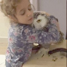 """catgifcentral: """"Rapport with Owl"""""""