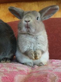 Cute Bunny, Rabbits, Bunnies, Moon, Girls, Animaux, Animals, Toddler Girls, Bunny