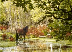 The New Forest in autumn - ponies and golden trees