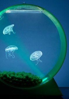 Jelly Fish Tank, I want!!