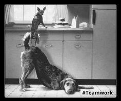 Teamwork is for everyone! Find out what teamwork means and how you become a great teamplayer in only five steps!