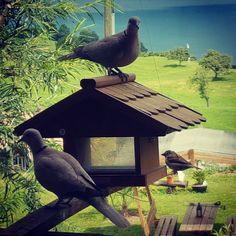 Bird Feeders, Outdoor Decor, Home Decor, Animals, Decoration Home, Room Decor, Interior Decorating