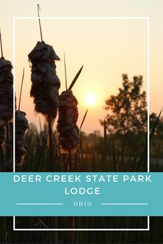 Our first family trip to Deer Creek State Park Lodge did not go as planned, but…