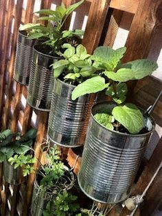 foto fräulein: Possum Proof Herb GardenTo secure the tins to the lattice I created a hook from a wire coat hanger and made a hole with a large nail. I also made holes in the bottom for drainage, so the plants above water the ones below.