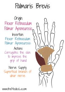 Hand Therapy, Massage Therapy, Muscles Of Upper Limb, Mega Series, Love Massage, Forearm Muscles, Medicine Notes, Occupational Therapy, Physical Therapy