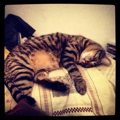 Semola, my cat!