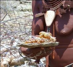 Myrrh resin . A Himba woman can collect a year's supply of myrrh in a morning . Dried myrrh sap has been used for frankincense amongst most religions of the world for thousands of years . The Myrrh resin also has astringent, disinfectant, antibacterial properties ( not so long ago, dentists would use a Myrrh tincture for oral treatments ). Nowadays Myrrh harvested by Himba women in Kaokoland gets exported to Paris, France for the highbrow perfume industry.