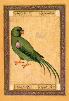 Parrot.jpg (506×745) Animal Painting, Miniatures, Gouache, 14.2x10.5 cm Origin: Iran, 18th century Album: Album of Polovtsov Source of entry: Museum of the Stieglitz School, 1924