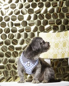 Red carpet ready ensembles from only at PetSmart! Martha Stewart Pets, Red Carpet Ready, American Made, Dogs, Animals, Beauty, Collection, Animales, Animaux