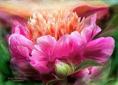 """Peony - Moment Of Glory"" by Carol Cavalaris"
