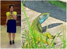 Bicho do Dia - Lagarto #look #ootd #fashion #moda #cea #animale