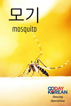 How could you remember 모기 (mosquito)? Reply in the comments below with your association!