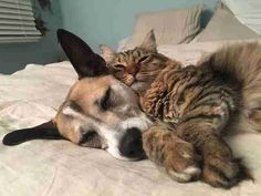 Lady and Kitty were rescued from the same shelter in Miami, Florida.