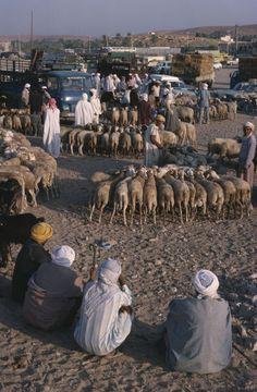 Sheeps market, Ghardaia, M`zab valley, Algeria: Photo:  Bridgeman Art, Gerard Degeorge