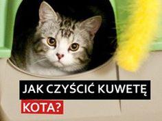 jak czyscic kuwete kota?, czyszczenie kuwety dla kota