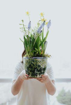 Christmas Flowers, Winter Flowers, Spring Flowers, Indoor Planters, Diy Planters, Plants Indoor, Indoor Garden, Planting Bulbs, Planting Flowers