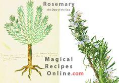Rosemary Dendrolibano The dew of the Sea Herbal Magic Rosemary herb Magical Properties of Rosemary Magical Uses of Rosemary Rosemary is used in magic to.jpg