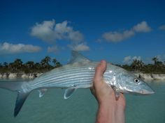 Delamere & Hopkins: Bonefishing in the Bahamas